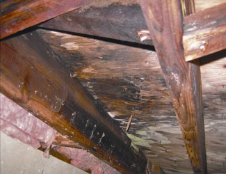 mold and rot in a Lansing crawl space
