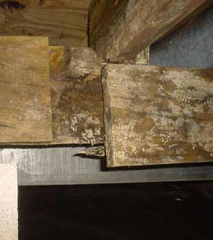 Extensive basement rot found in Kalamazoo by Ayers Basement Systems