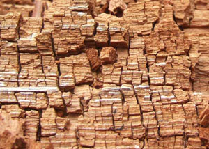 Wood severely damaged by dry rot damage in Charlotte