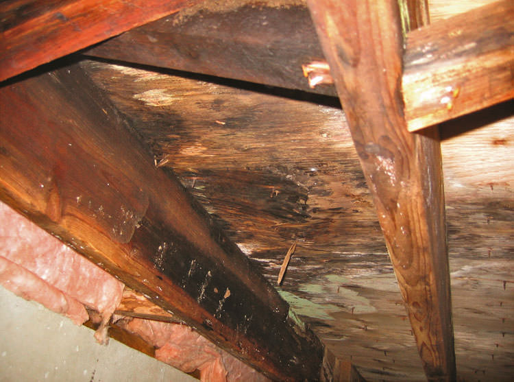 Mold Damage In Basements And Crawl Space Michigan