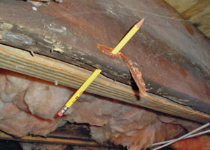 Destroyed crawl space structural wood in Lansing