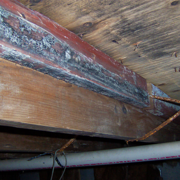 Rot Mold Damage Repair In Kalamazoo Lansing Grand