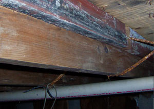 Rotting, decaying wood from mold damage in Battle Creek